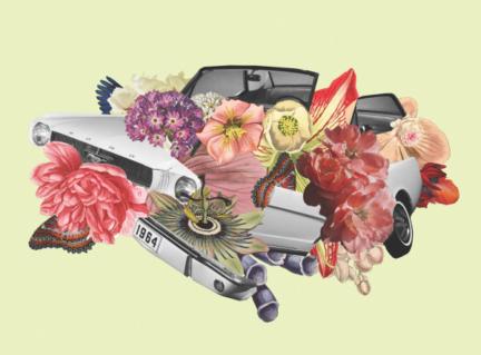 White Auto Bloom